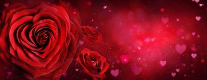 华伦泰卡片-玫瑰和心脏 免版税库存照片