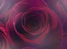 华伦泰玫瑰色背景 库存图片