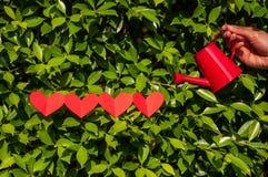 华伦泰,与喷壶的四心脏在草 免版税库存图片