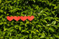 华伦泰,在草的四心脏 免版税库存图片