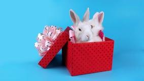 华伦泰` s天销售概念,兔子可爱的夫妇与桃红色弓的 股票视频