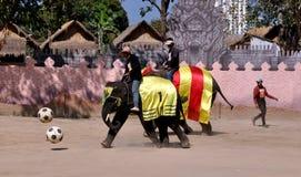 华欣,泰国:踢足球的大象 免版税库存图片