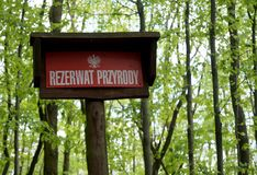 华沙wawer波兰森林储备 免版税库存照片