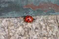 华盛顿全国大教堂-瓢虫 免版税库存图片