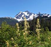 华盛顿山峰顶和花 免版税库存照片