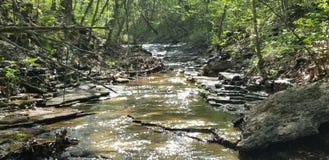 华盛顿州公园小河 库存照片