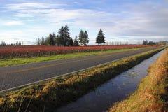 华盛顿州农村路在冬天 免版税库存照片