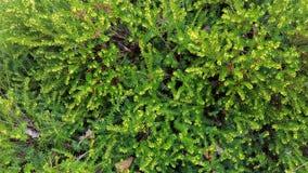 华盛顿植被 库存图片