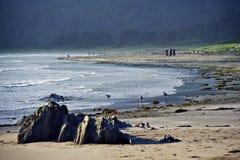 华盛顿海滩 库存照片