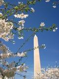 华盛顿纪念碑和樱花014 免版税图库摄影