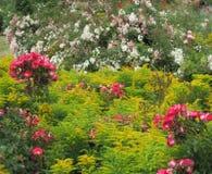华美的五颜六色的花在伊利沙伯王后公园庭院里开花 库存图片