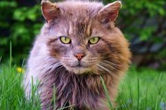 华美的汤姆猫!!! 免版税库存照片