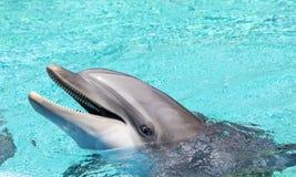 华美的瓶被引导的海豚 库存照片