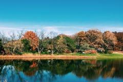 华美的秋天树在芝加哥 免版税库存照片
