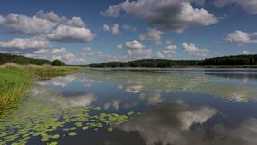 华美的自然风景在一个夏日 绿色植物、镜子水表面和天空蔚蓝与雪白云彩 股票视频
