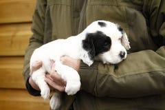 华美的逗人喜爱的小狗 图库摄影