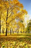 华美的黄色在深刻的秋天把Paradis留在 免版税库存图片