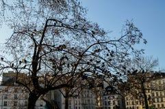 卓越的地方在巴黎 免版税库存图片