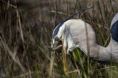 单丝和野生生物的危险 免版税库存照片