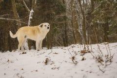 单独一条狗在森林在冬天 下雪 一个无家可归的动物 人道主义 动物保护 库存图片
