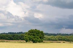 单独一棵树在领域 免版税库存图片