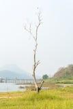 单独不生叶的树在领域草 库存照片