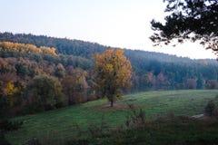 单独与黄色叶子的大树在绿色草甸的河沿河乡下风景唯一树的,秋天自然backgrond 免版税库存照片