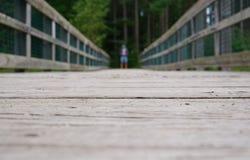 单独人在杉木森林附近的桥梁的 库存照片