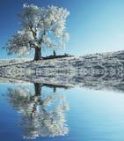 单独冻结的结构树 免版税库存图片