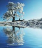 单独冻结的结构树 库存照片