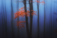 单独在雾中 免版税库存照片