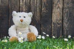 单独坐以与老木backg的绿色的逗人喜爱的玩具熊 图库摄影