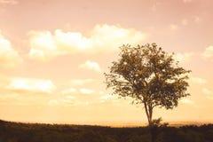单独大树悲伤在夏天 库存照片