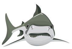 单独大鲨鱼在传染媒介 库存照片