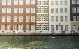 单独天鹅在城市 免版税库存照片