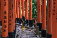 单独妇女由Torii门的供徒步旅行的小道盖子的 库存图片