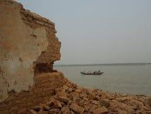 单独孟加拉 库存照片