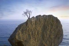 单独岩石海运结构树 免版税库存照片