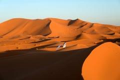 单独巴巴里人在撒哈拉大沙漠 免版税库存照片