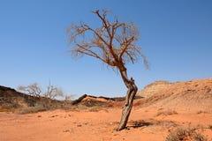 单独干燥树在Neqev沙漠 免版税库存图片
