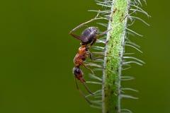 单独昆虫 库存图片