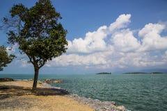单独树、海和云彩 免版税库存图片