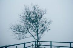 单独树剪影在有雾的早晨,葡萄酒样式 免版税库存照片