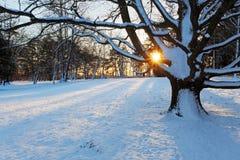 单独树在冬天公园。 图库摄影