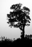 单独树在森林是黑白颜色 免版税库存照片