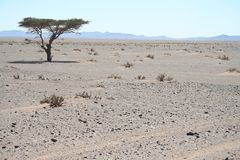 单独树在沙漠 免版税库存照片