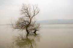 单独树在湖,冬天季节,反射 免版税库存照片