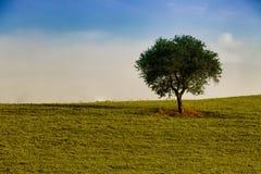 单独树在领域 库存照片