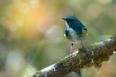 单独栖息迷人的鸟 免版税库存照片