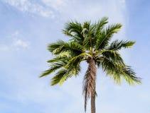 单独椰子树 免版税库存照片